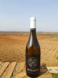 Belo vino Hacienda Molleda Blanco Joven